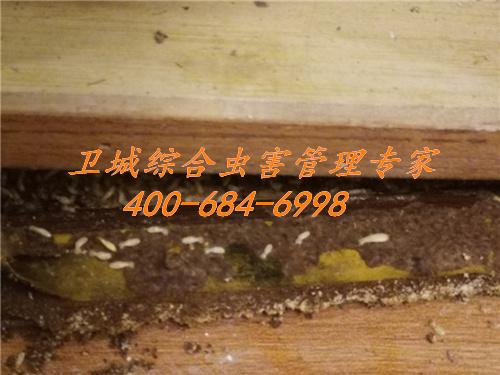 惠州白蚁防治公司,惠城白蚁防治中心,惠阳白蚁防治站